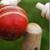 Chauka Cricket Scoring Ap icon