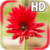 Gerbera Flower LWP app for free