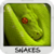Snakes Wallpapers by Nisavac Wallpapers icon