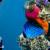 Underwater Sliding Puzzle app for free