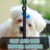 Cat and Dog Zipper Lock app for free