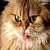 Funny Cute Cats Wallpaper in HD 2014 icon