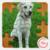 Jigsaw Pet Dog icon