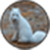 Arctic Fox Wallpaper Image app for free