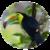 Weird Birds  icon
