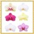 Orchid Flowers Onet Classic Game icon