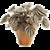 Indoor Plants app for free