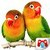 Educational Game Real Birds app for free