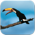 Birds Live wallpaper app icon