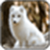 Arctic fox Image_1 app for free