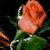 Rose Diamond Live Wallpaper app for free