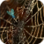 Golden Spider Web Live Wallpaper app for free