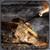 Border War Tank Attack icon
