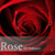 Free Rose wallpapers app for free