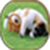 Puppy wallpaperapp icon
