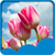 New Tulips Live Wallpapers  app for free