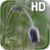 Flower Bud LWP app for free