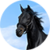 Horse Breeds app for free