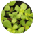 Benefits of Purslane app for free