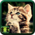Beautiful Cats Wallpaper icon