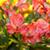 Unique Flowers Live icon