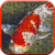Koi Jigsaw Puzzle app for free