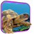 Turtle 3D Live Wallpaper app for free
