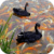 Black Swans Live Wallpaper icon