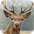 Deer Hunter: 3D Sniper Shooter app for free