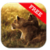 Free Wild Lion Wallpaper app for free