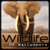 HD Wildlife wallpapers icon