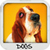 Dogs Wallpapers free app for free