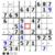 Baboons Sudoku icon