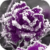 Frozen Purple Rose Live Wallpaper icon