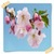Cherry Blossom Flowers Onet Classic Game icon
