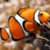 Marine Fish HD Wallpaper For Android Phones icon