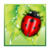 Running Beetle icon