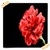 Carnation Flowers Onet Classic Game icon