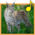 Forest Animals for Children app for free