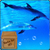 Underwater Swimming Dolphin Live Wallpaper app for free