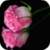 Fresh Pink Rose Live Wallpaper app for free