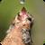Thirsty Bird Live Wallpaper icon