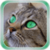 Cat Star Live Wallpaper icon