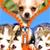 Puppy Zipper Lock Screen Top icon