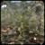 Oak Tree Simulation 3D app for free