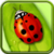 Ladybug Live Wallpaper LWP  icon