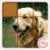 Puzzle Pet Dog icon
