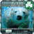 iPhone Polar Bear GoLocker XY app for free