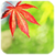 Touch Autumn Leaves Live Wallpaper icon