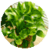 Popular Easy to grow House Plant icon